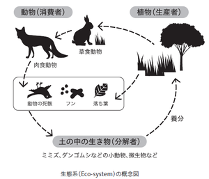 いま しょう 次 の 会 生態 系 で