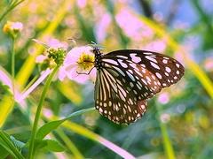 butterfly_by_taiyofj.jpg