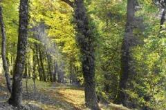 mine_forest.JPG